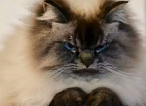 刚进闺蜜家门,一扭头就看到她家猫咪这个表情,立刻一脸懵逼