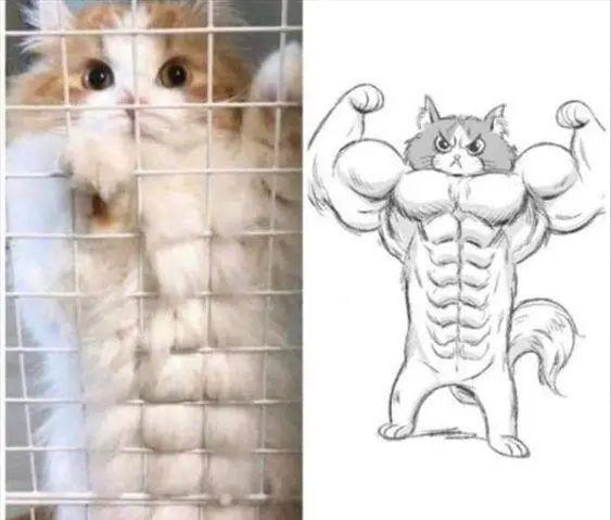 宠物拟人,猫咪有14块腹肌,女朋友生气当然要哄了