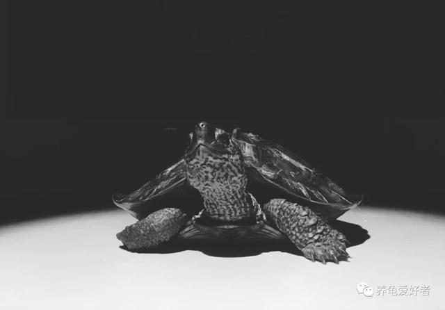 原本已经稳定的养龟水体,立马就变样了?