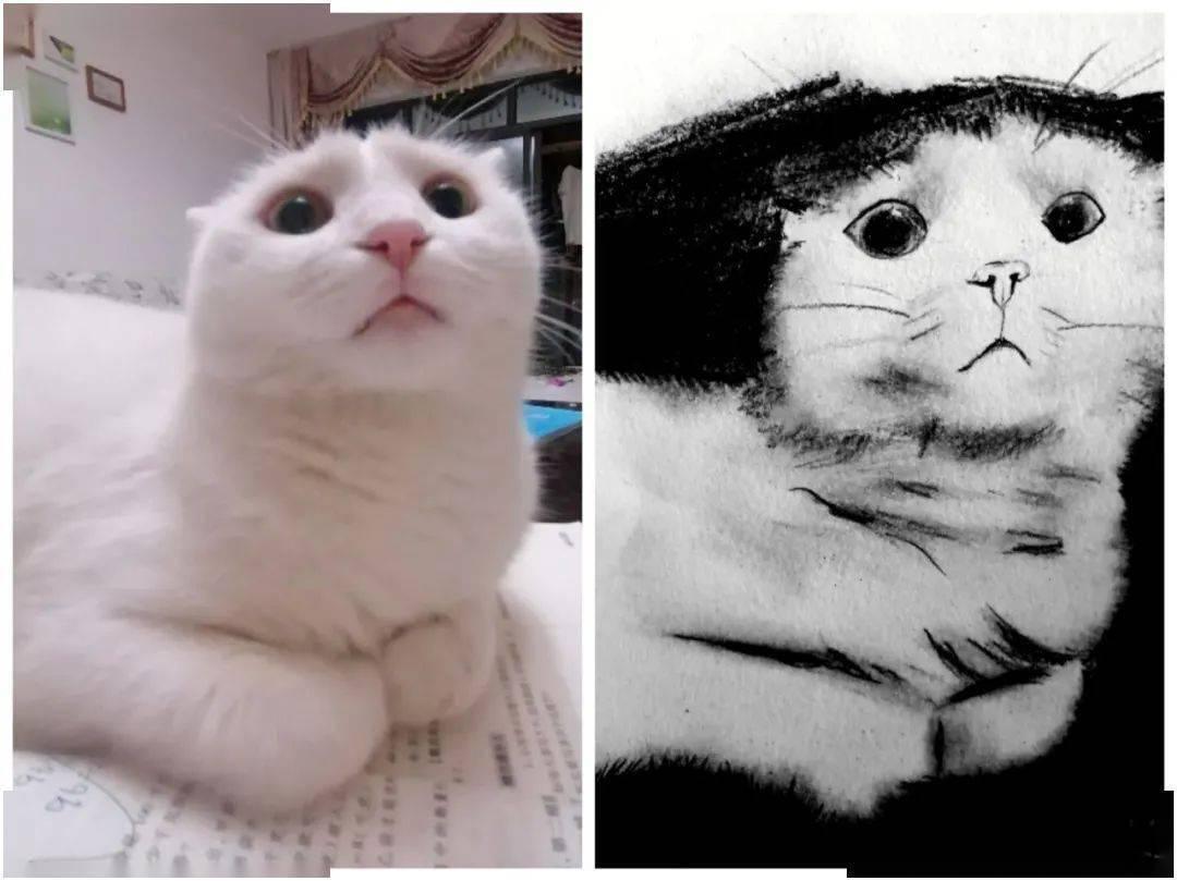 """不要轻易做只猫,因为你不知道你的主子会对你下什么样的""""黑手""""!"""