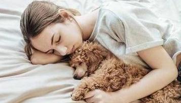 """泰迪犬信任你还是防备你?从它的""""睡姿""""就可以看出来!"""