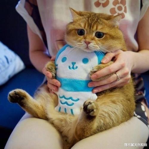 英短猫毛球堵塞怎么办?