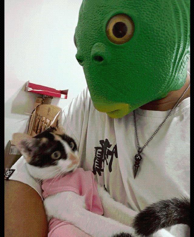 网友戴着面具抱着猫,它并不害怕甚至想吃一口:我该从