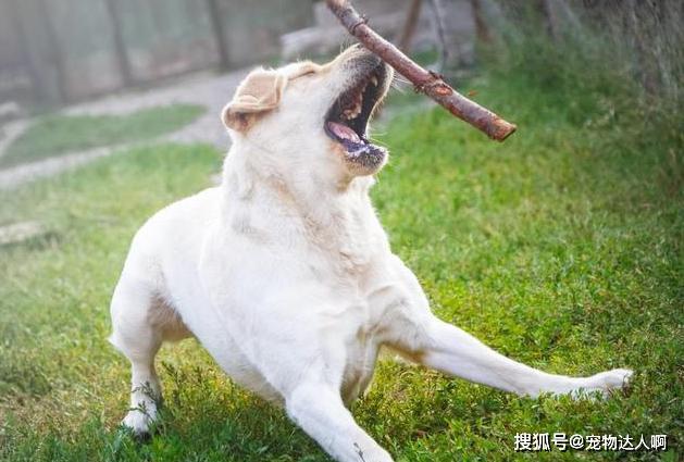 """被恶狗攻击怎么办?注意两点,不要""""站着不动""""和""""转身就跑""""!"""