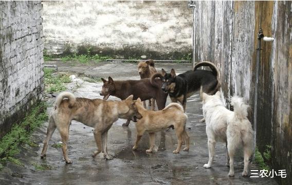 为何有人花几千买宠物狗,却不愿意养土狗?你凭什么看