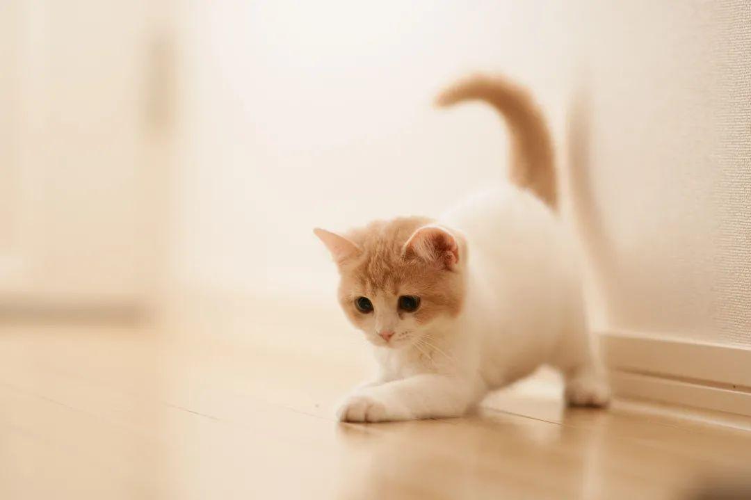 夜话丨老舍:过了满月的小猫们真是可爱
