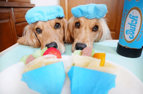 国外一对双胞胎狗狗的神同步日常,网友:简直一模一样!