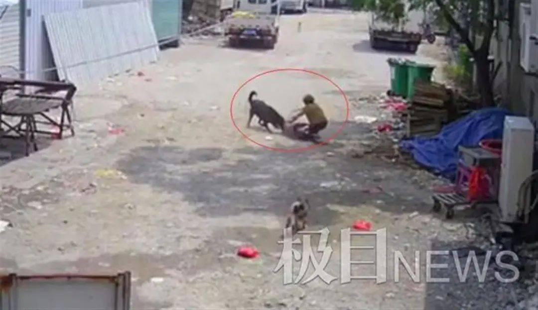 福建一老人被狗撕咬身亡,警方已介入