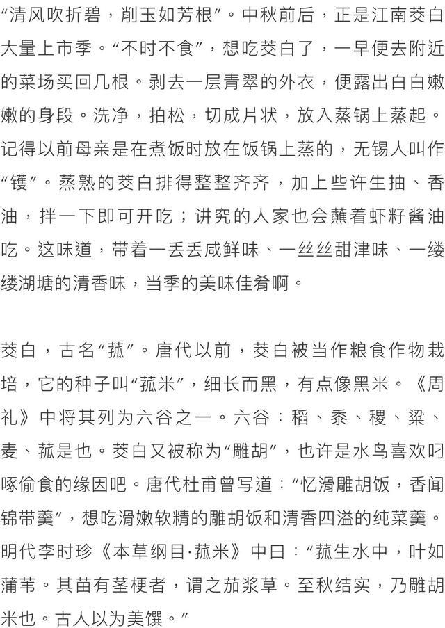 「小南夜读」茭白最是江南味