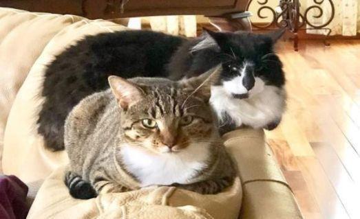 """主人捡回一只小猫,家猫对它""""一见钟情"""",整天抱着不"""