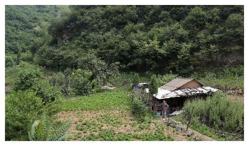 83岁老人有5男3女8个孩子,却住在山沟小屋17年不愿回家,因为啥