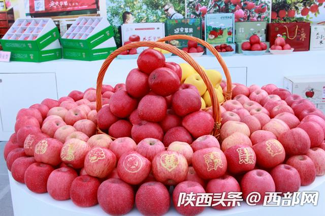 能上太空的陕西苹果 年产700多亿个 够全国人民每人吃50个