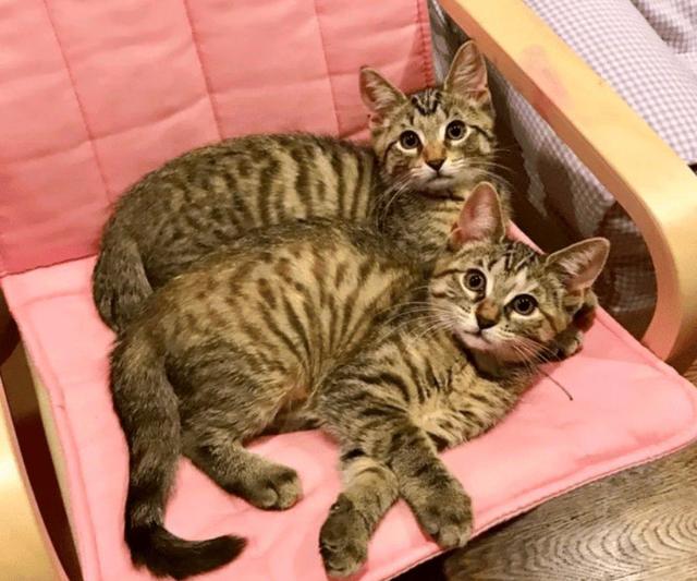 """孩子在家太闹腾,""""硬核""""妈妈想到好办法!收养两只猫"""