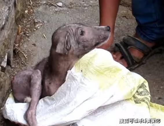 """""""狗狗得皮肤病被抛弃,身上只剩几根绒毛,男子心疼毫不犹豫带回"""