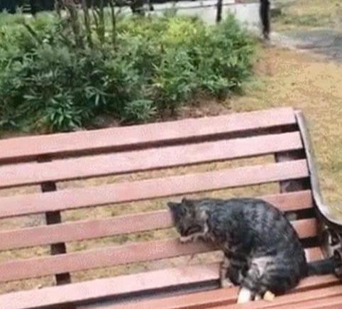 """""""公园长椅上发现一只猫,走近看发现已经僵了:在喵星要幸福"""