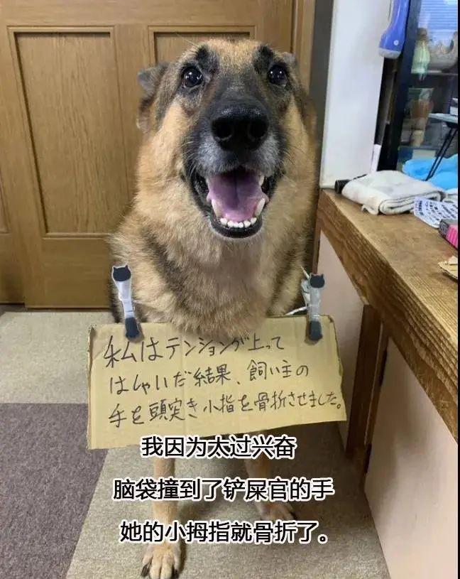 """""""救命!我被我家狗打进了医院!"""