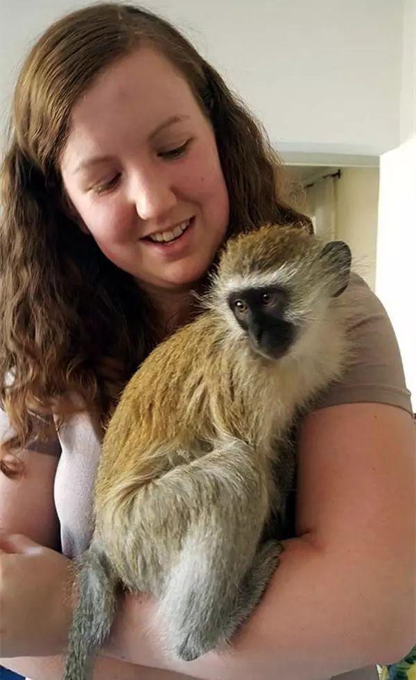 猴子出了车祸,得好心人救治收养,与猫狗成了一家,还有了小猴子