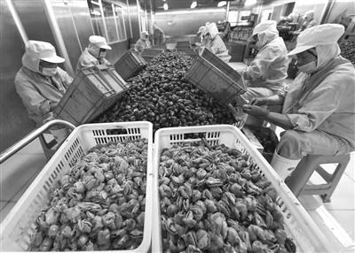 嘉兴农民养殖蜗牛致富
