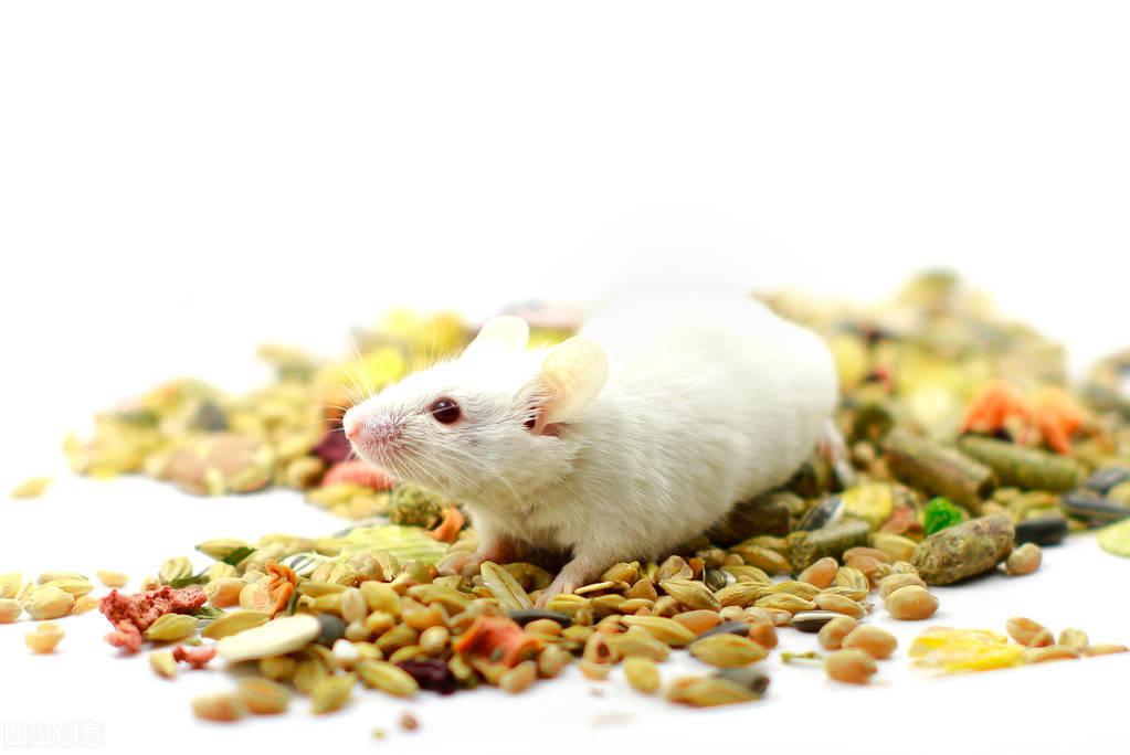 动物造模——婴儿痉挛症模型SOP介绍