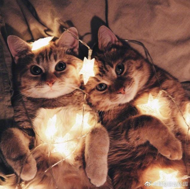 莫斯科一位美女铲屎官收养了两只橘猫兄弟……
