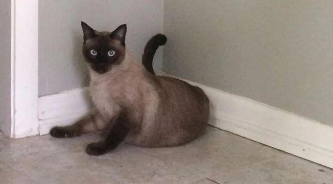 流浪猫整天来网友家蹭饭看她的猫,莫非爱上她的猫了
