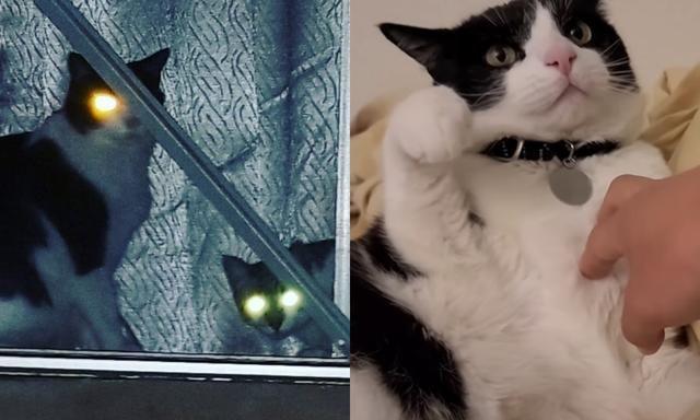 奴才想抚摸爱猫却被强烈闪避,猫咪摆萌脸拒绝!
