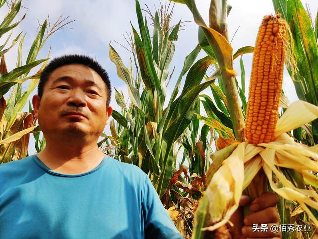 农村三兄弟流转1000亩土地,刚种植了一茬玉米,为何就期待多亏钱