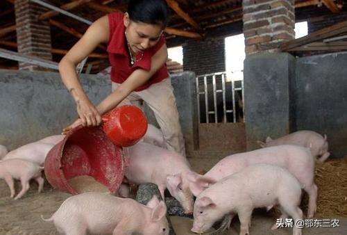 四川一女养猪人,今年亏损10多万,末尾82头猪苗共卖5000元