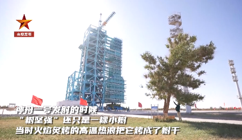 百折不挠!载人航天发射塔架旁有一棵树坚强