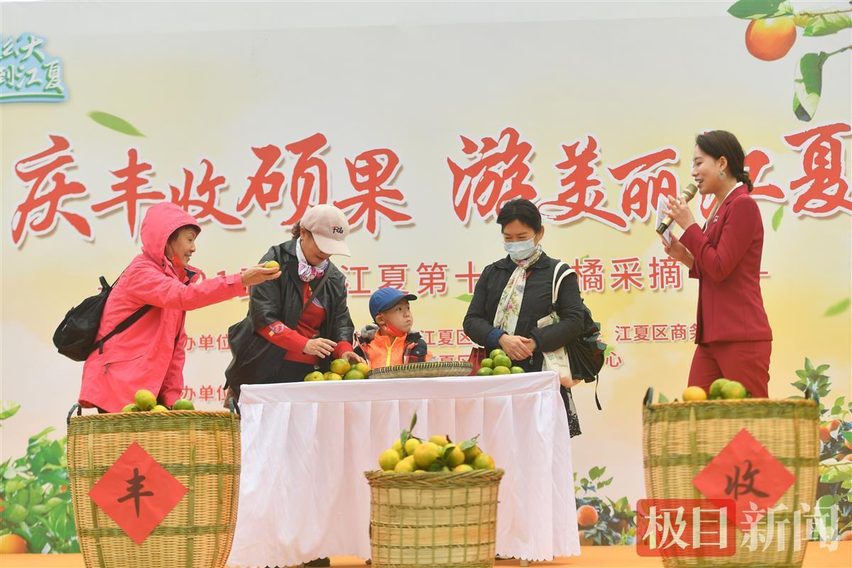 庆丰收硕果,游美丽江夏!武汉江夏第十届柑橘采摘节开幕了
