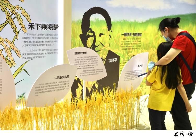 """今天世界粮食日丨""""风吹过稻田,我就想起你!""""网友想念袁爷爷上热搜"""