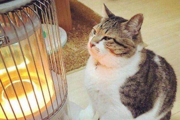 """猫咪""""最爱铲屎官""""的季节,是冬天"""