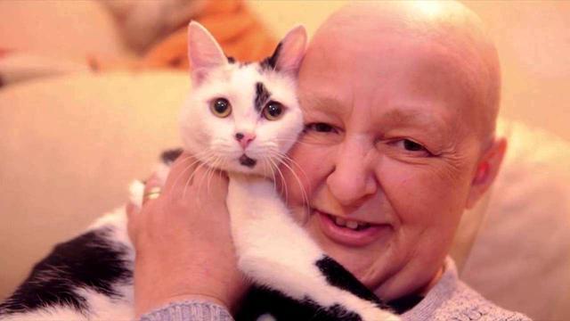 猫咪一直以为自己是人,常常做出的一些反常举动,把主