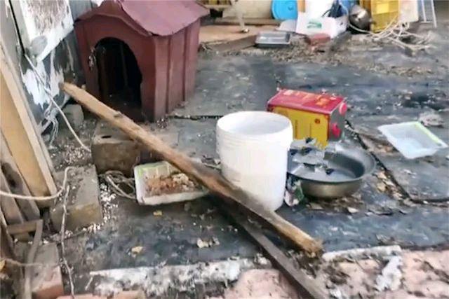 猫咪饱受主人折磨,吃垃圾住破房,一根铁链拴门外,看着