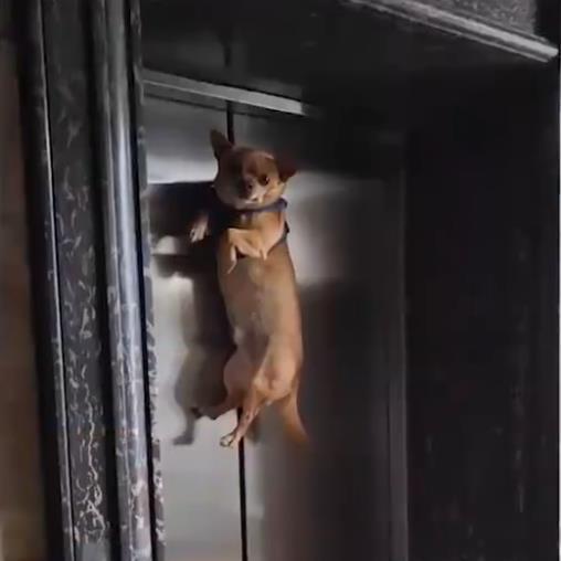辽宁一狗狗吊在电梯门口,女子看到心急呼救,随后让人
