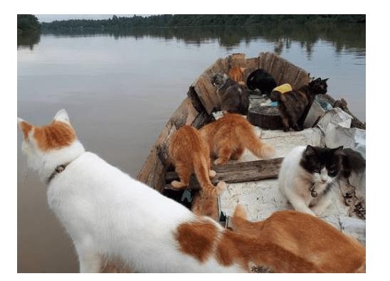 主人带猫咪们坐船捕鱼,看到这个壮观的场面后,网友称